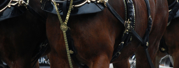 Budweiser_Clydesdales_Boston